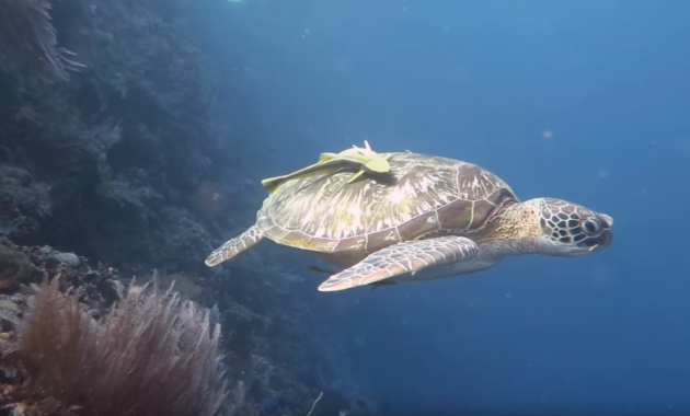 Akumal Beach Resort Mexico a Paradise for Divers and Turtles Happyness