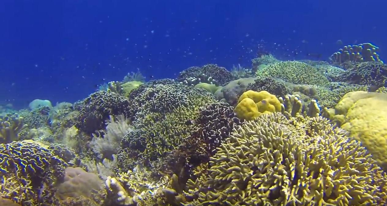 bunaken-national-park-one-of-indonesia-dive-sites