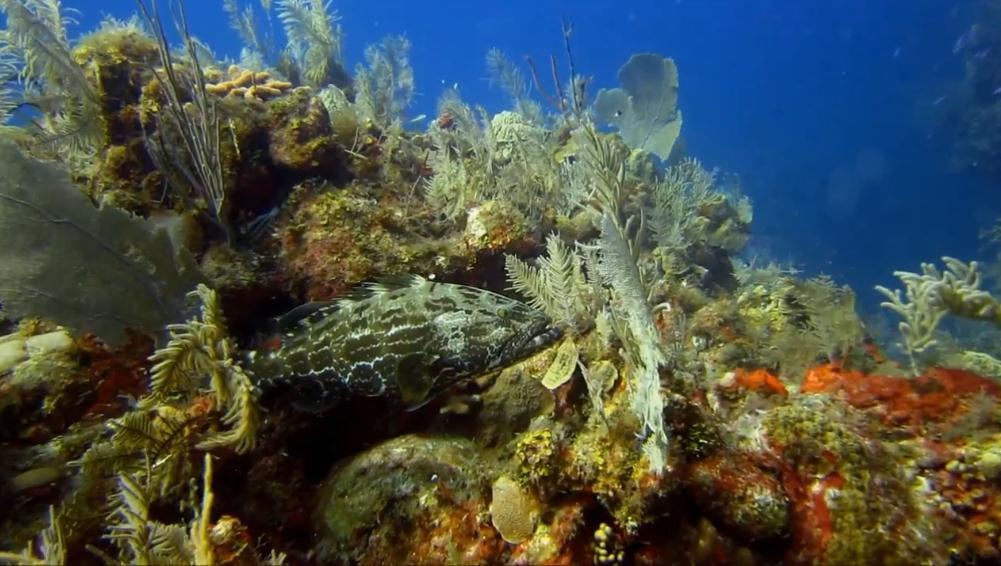 Cuba's Scuba Diving Destinations