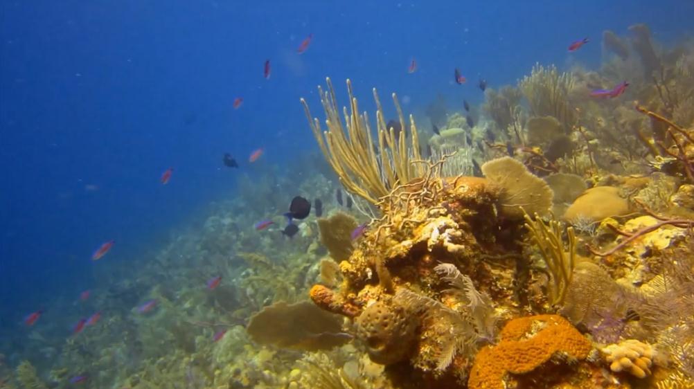 cayo-largo-top-scuba-diving-locations