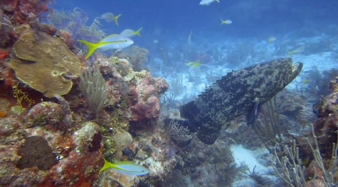 holguin-dive-spots