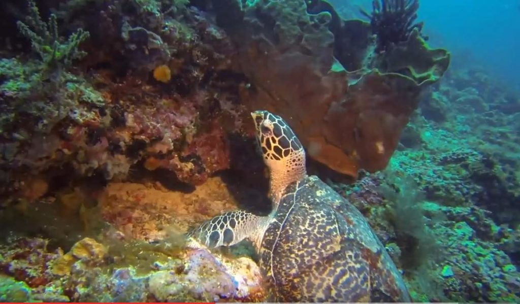 Top 5 Diving Places in South East Asia