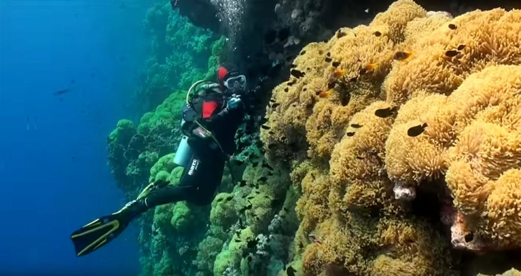 Crystal Clear Waters are The Best Diving Red Sea