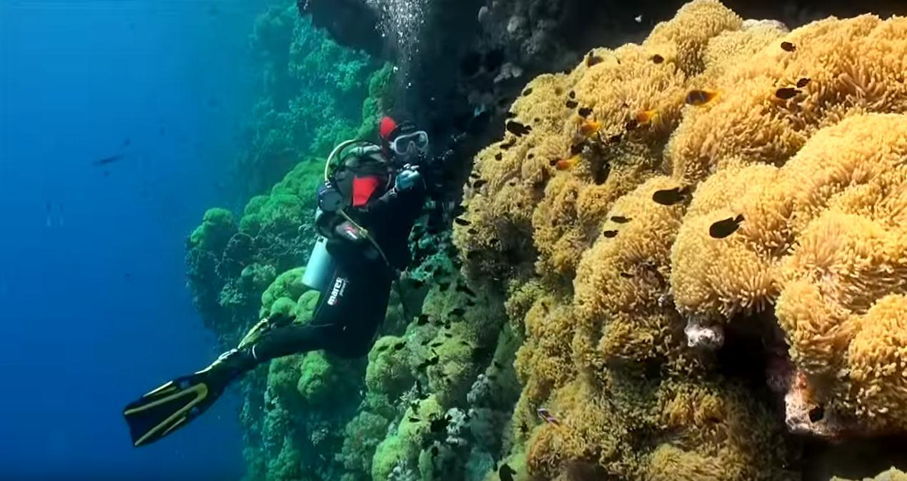 best-diving-red-sea