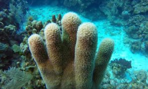 caribbean scuba diving destinations,caribbean dive resorts all inclusive,caribbean scuba vacations,scuba diving destinations caribbean,-min