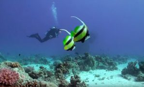 diving-red-sea-in-egypt