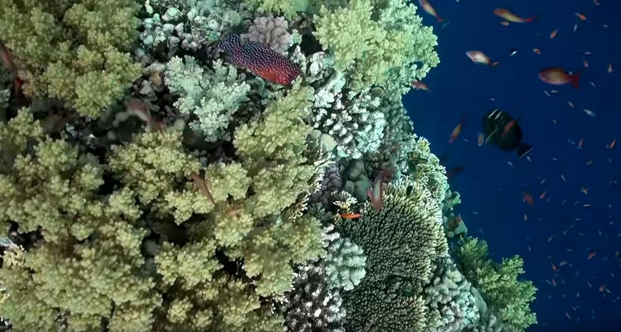 red-sea-diving-liveaboard