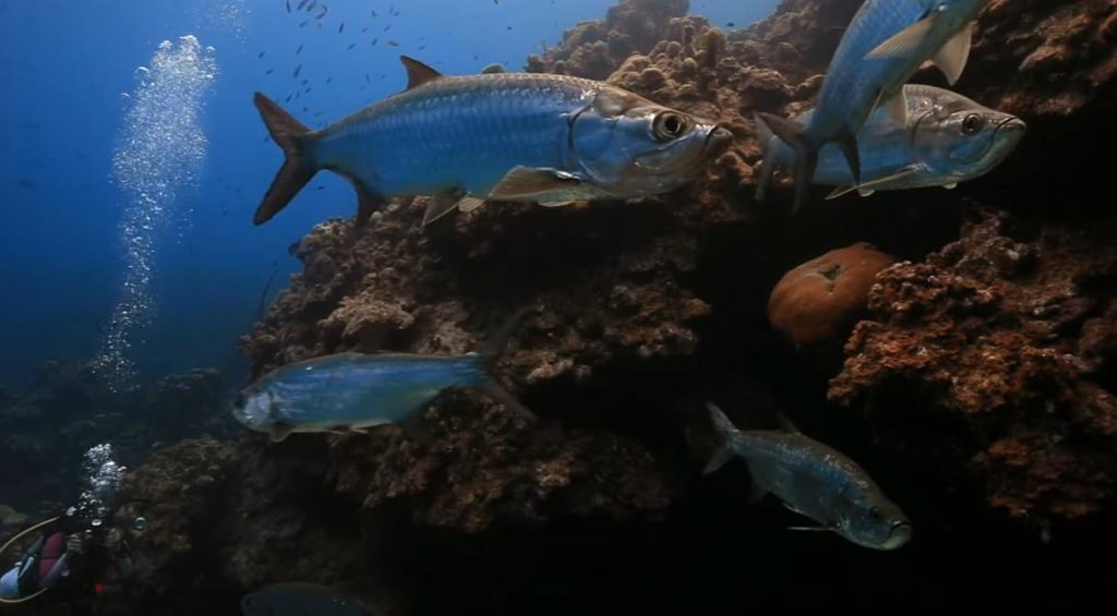 Grand Cayman Scuba Diving Resorts, In This Side Of Paradise