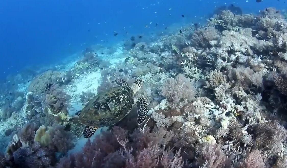 Diving spot in komodo island