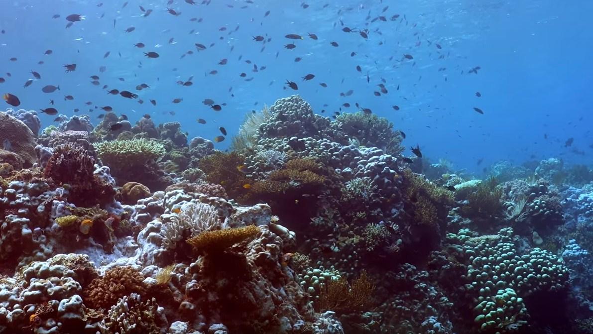 Wakatobi Dive Site