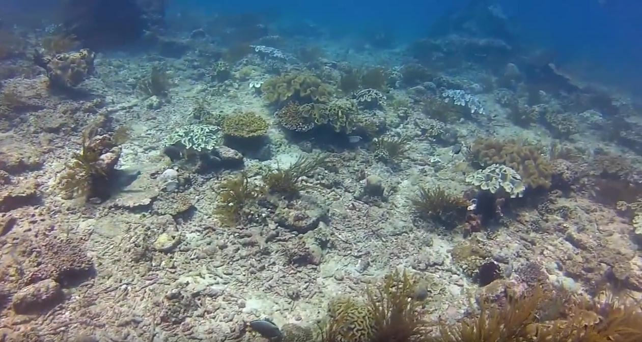 bloo-lagoon-bali-ccuba-diving
