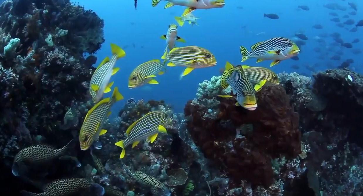 komodo island dive picture
