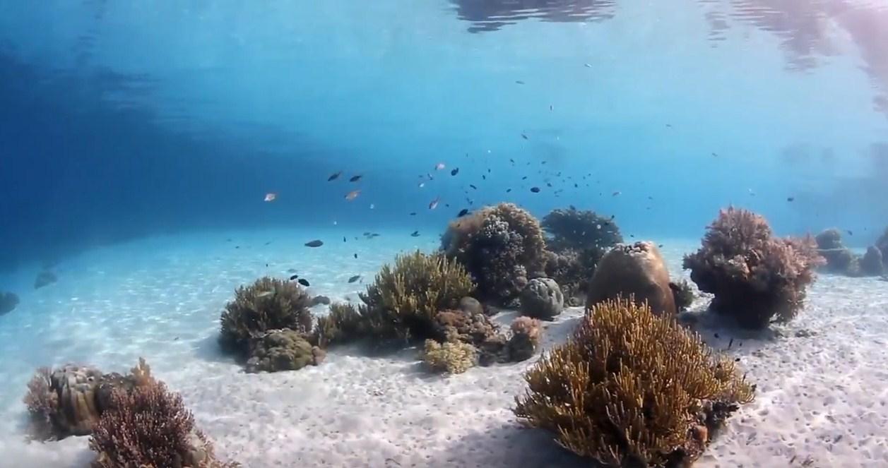 komodo island liveaboard diving