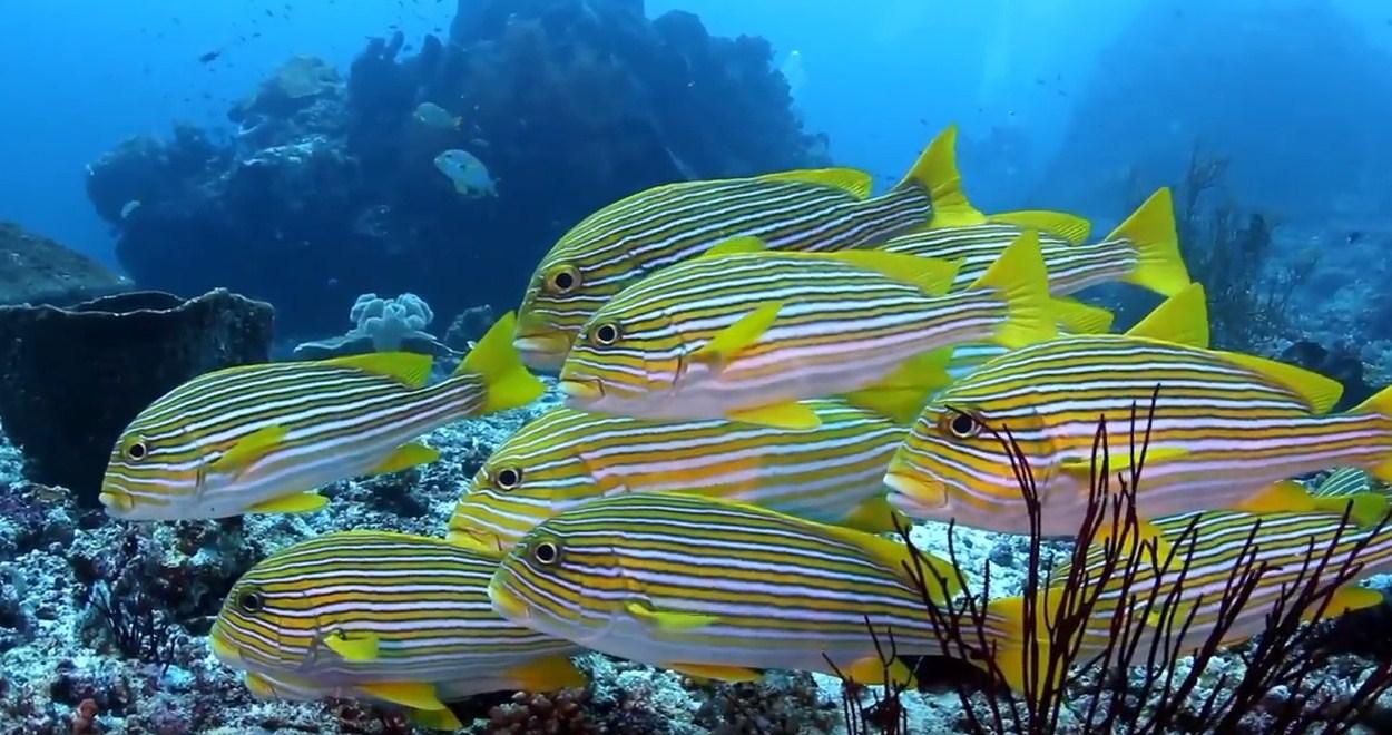 marine lifes komodo island liveaboard diving