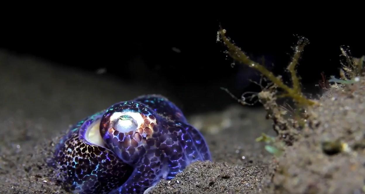night komodo island liveaboard diving