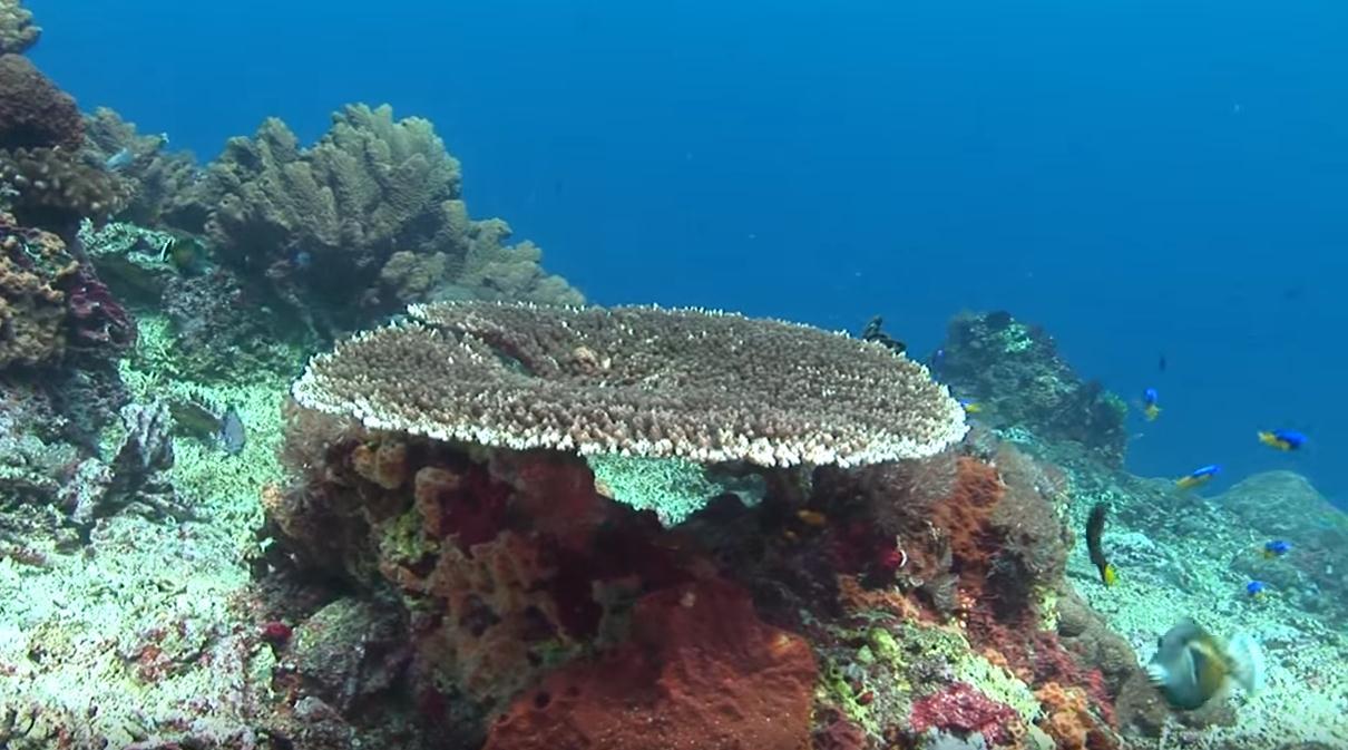 nusa-penida-bali-ccuba-diving