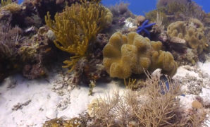Fast-Growing-Corals-for-Marine-Conservation-Projects-min