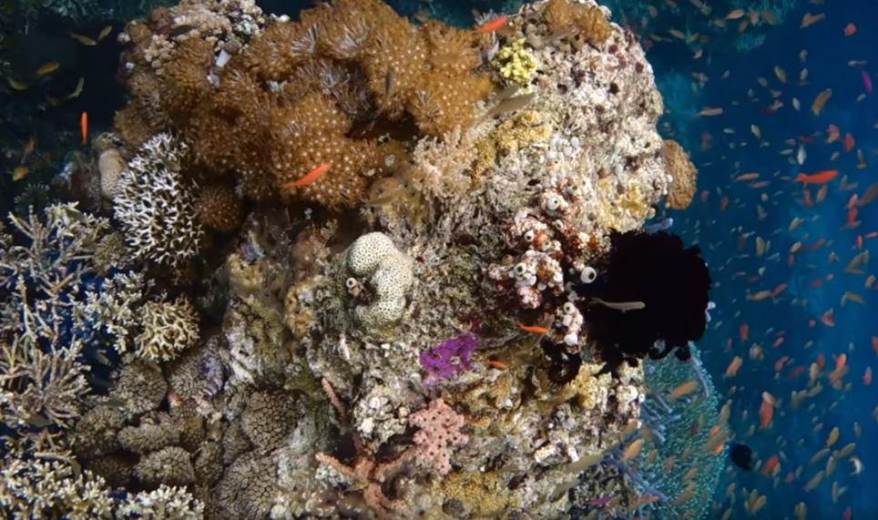 Kanawa lifeboard flores underwater