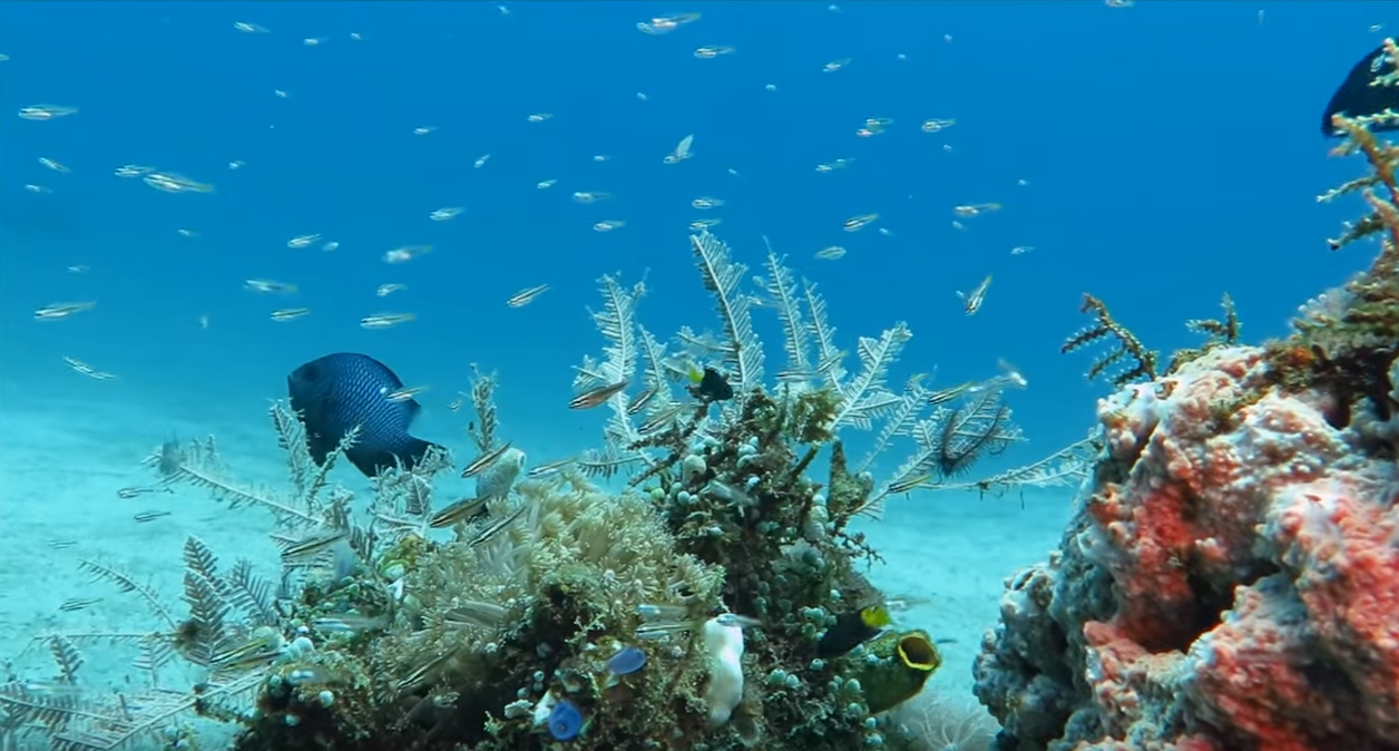 Marine natural coral reef Conservation Indonesia Projects in Raja Ampat