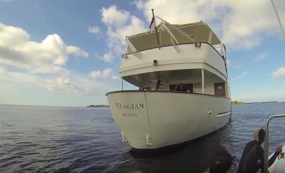 Pelagian dive yacht Wakatobi