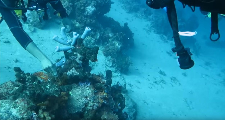 coral reef conservation internships