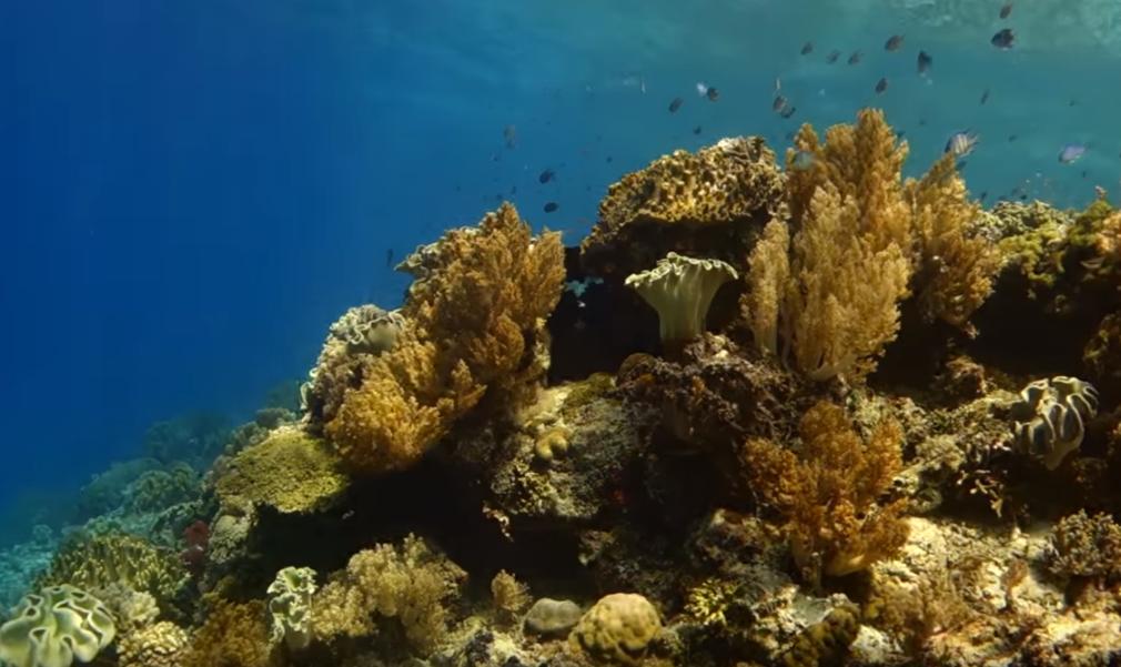 diving spots on Flores