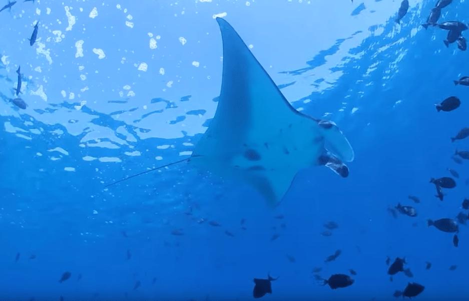 derawan the best dive sites in indonesia-min