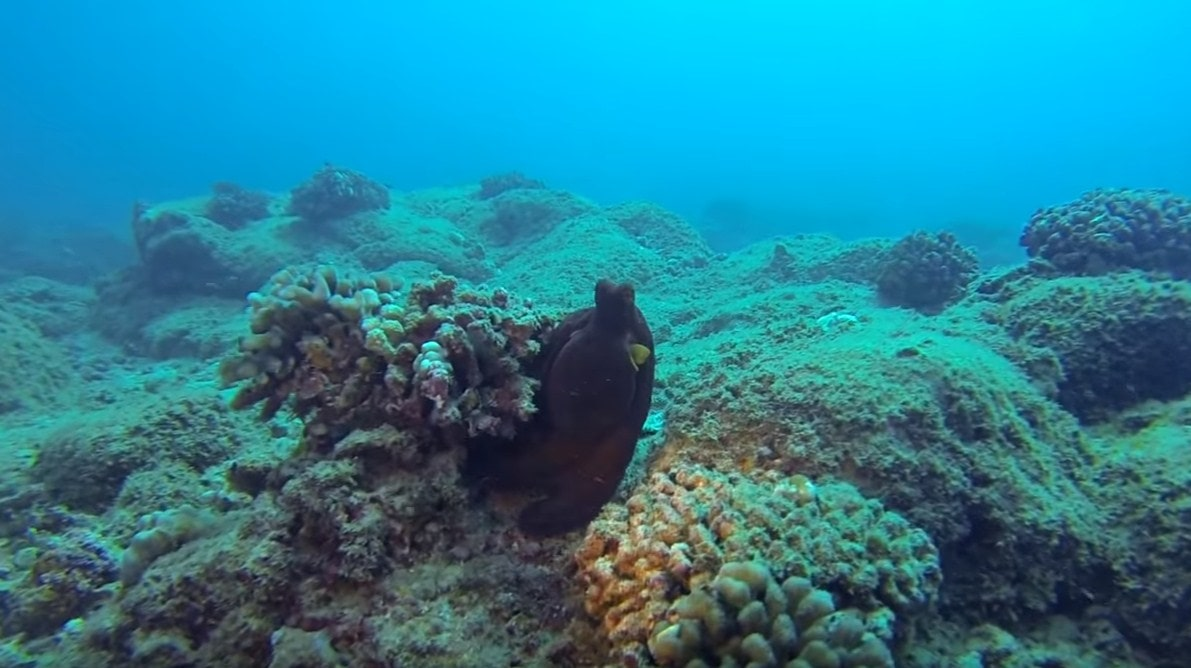 kauai scuba diving sites,scuba dive kauai,scuba diving in kauai hawaii,scuba diving kauai hawaii-min