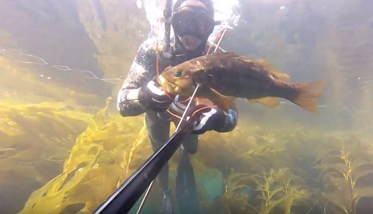 southern california spearfishing locations-min