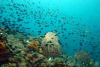Ambon The Top Secret Scuba Diving Spot in Indonesia