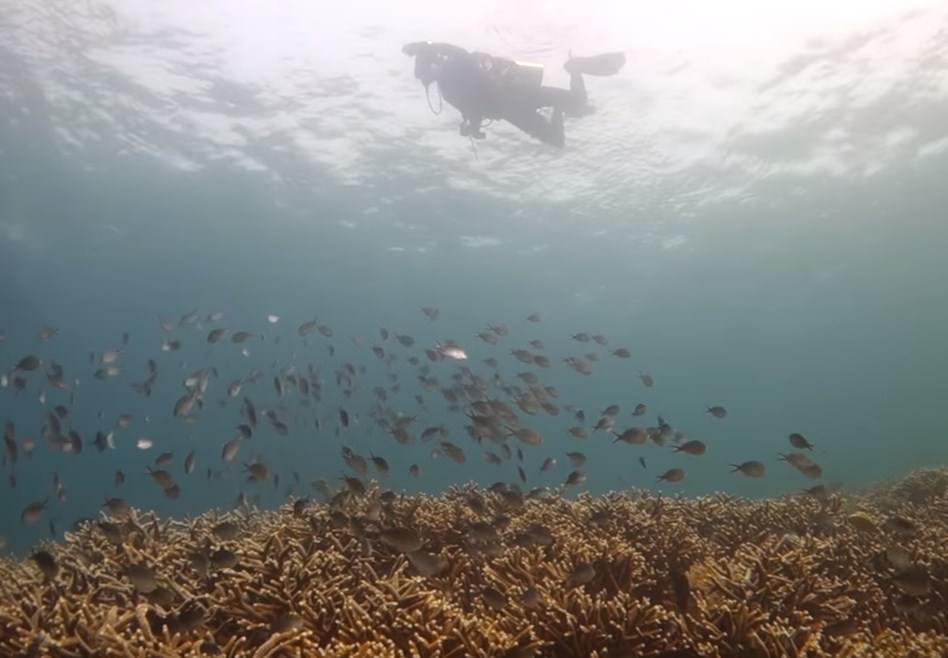 Laha Ambon dive site