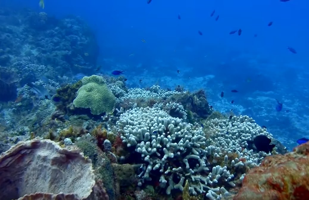 Barrier Reef Scuba Diving