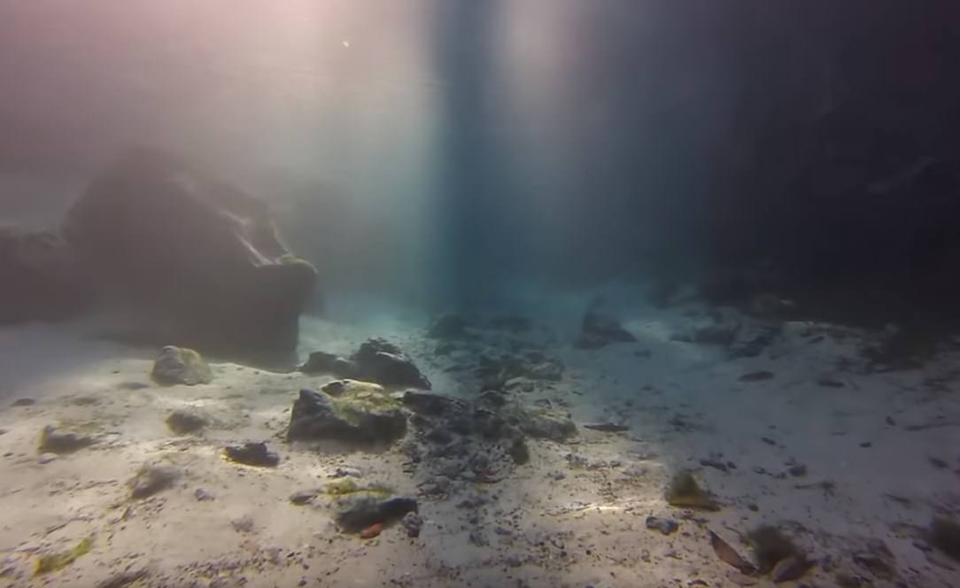 Dive in Pensacola and Crystal River