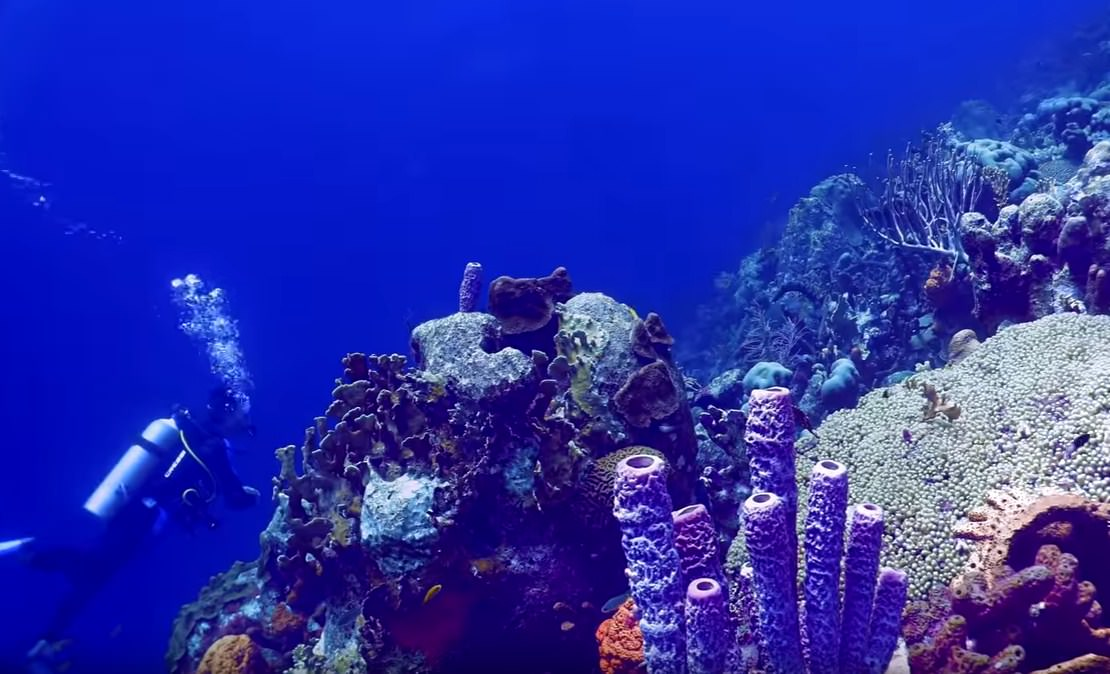 Peaceful and Safe Place for Scuba Diving Bonaire