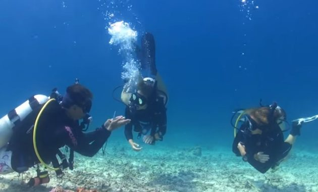 Scuba Diving Certification Edmonton