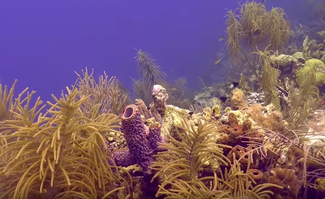 Scuba Diving in Bonaire HD Pictures