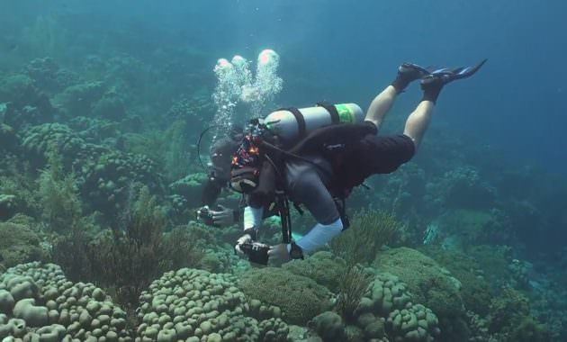 Tips to Find Cheap Scuba Diving Trips