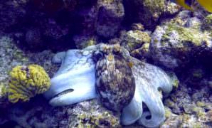 squid Scuba Diving in Bonaire