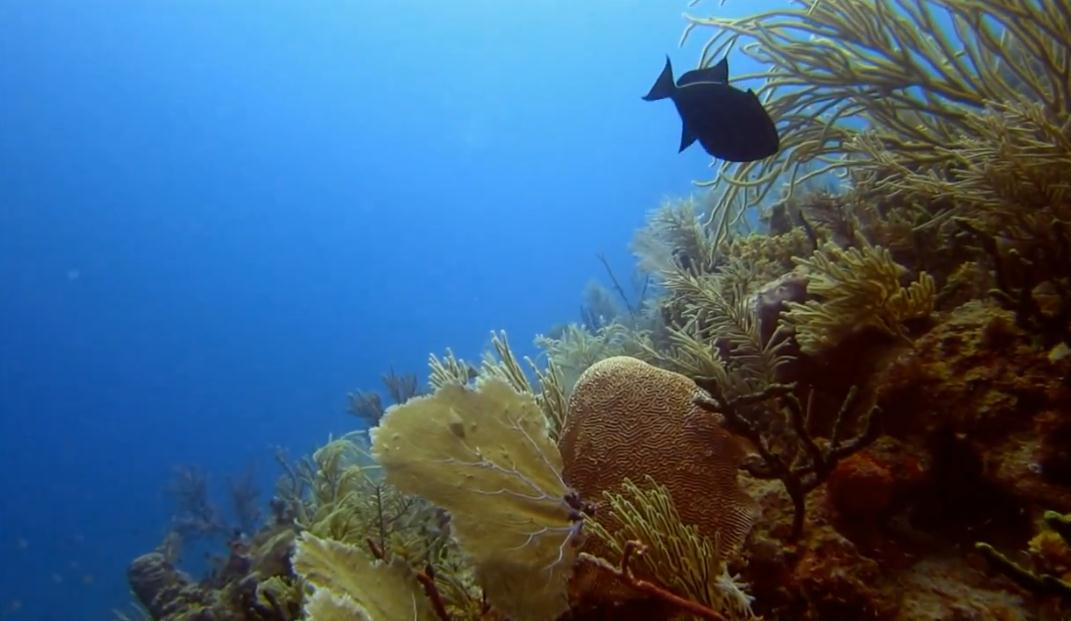 cubas-scuba-diving-destinations