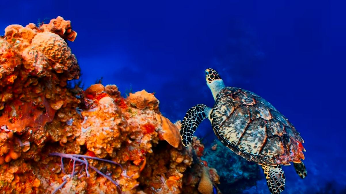sipadan-island-in-malaysia-is-the-ghost-of-the-sea-turtles
