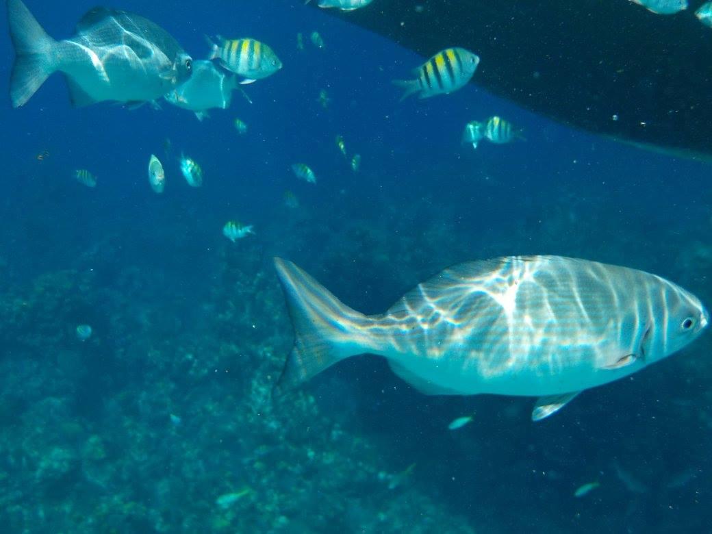 best-scuba-diving-central-america