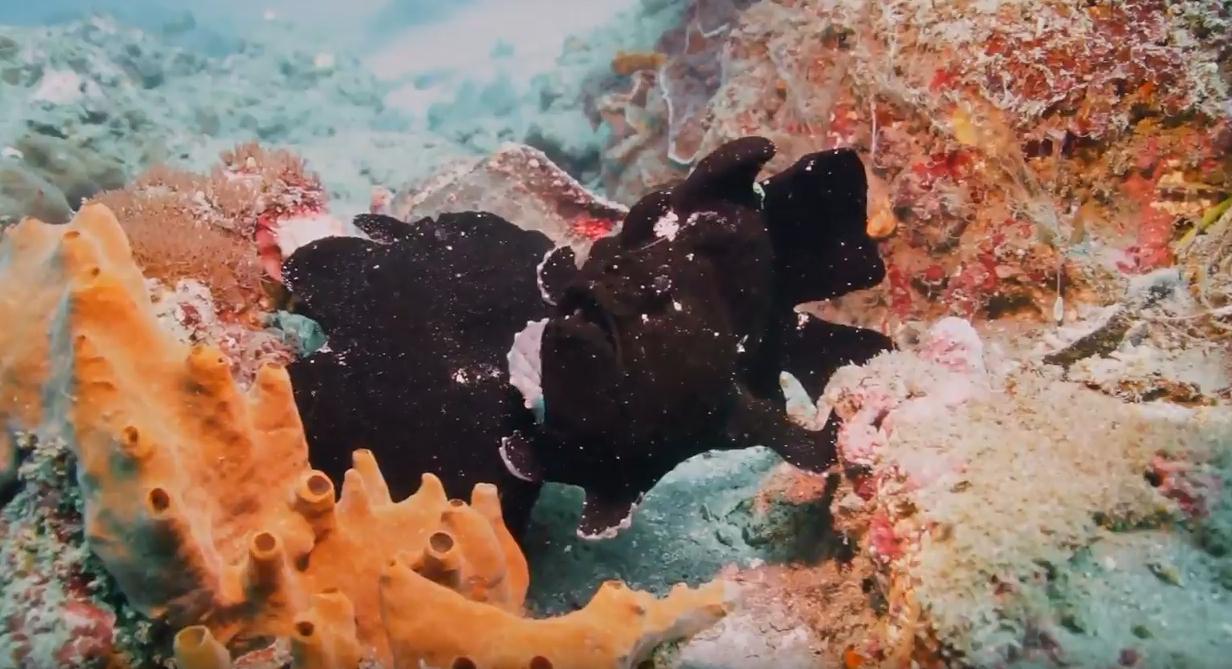 candi-dasa-bali-ccuba-diving