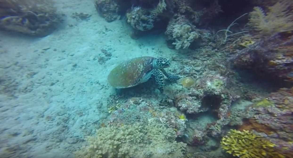 gopro-pumeteran-bali-ccuba-diving