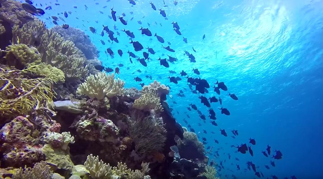 Wakatobi coral reef Top Diving Destinations in