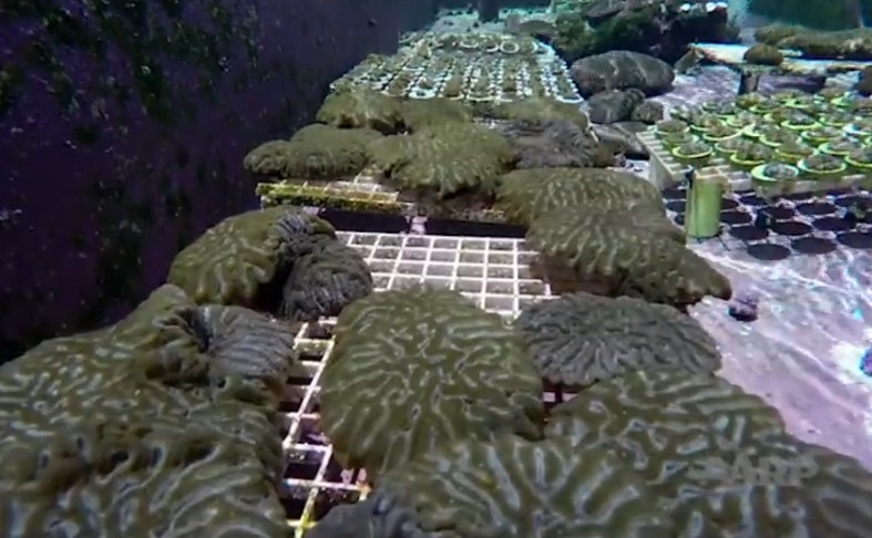 information on coral reefs