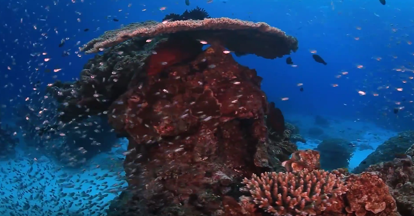 the great barrier reef protection