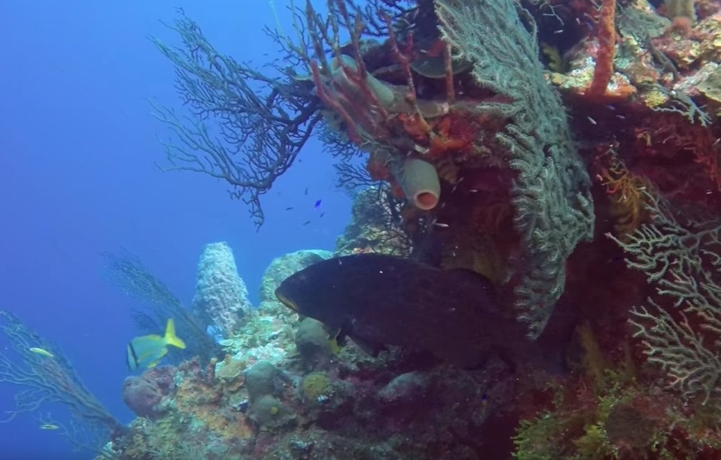 coral reef roatan dive packages, hoteles en west end roatan-min