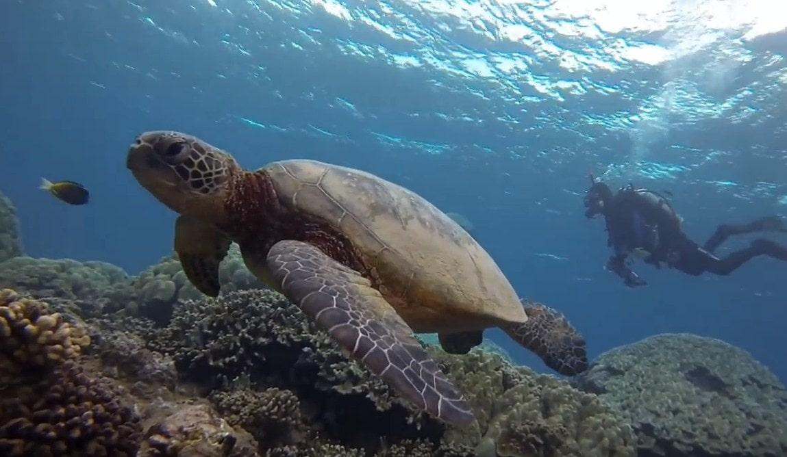 maui diving scuba center,maui hawaii scuba diving,maui scuba dive,maui scuba diving-min