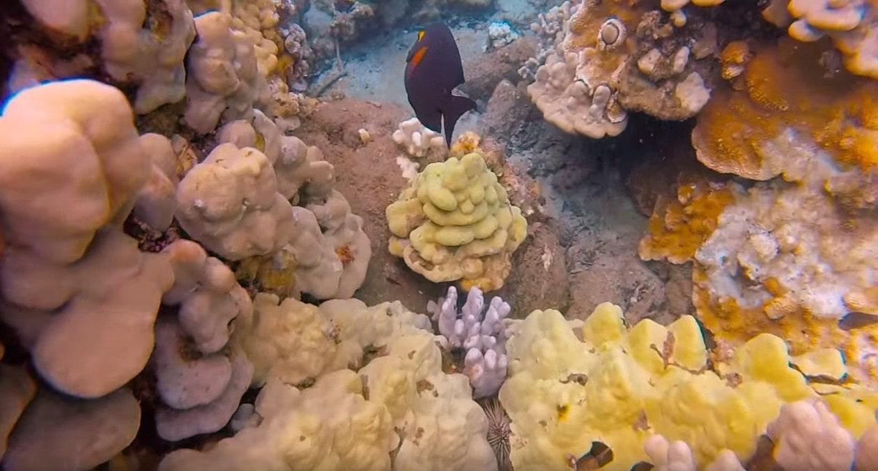 maui scuba diving certification,maui scuba diving for beginners,maui scuba diving reviews,maui scuba diving sites-min