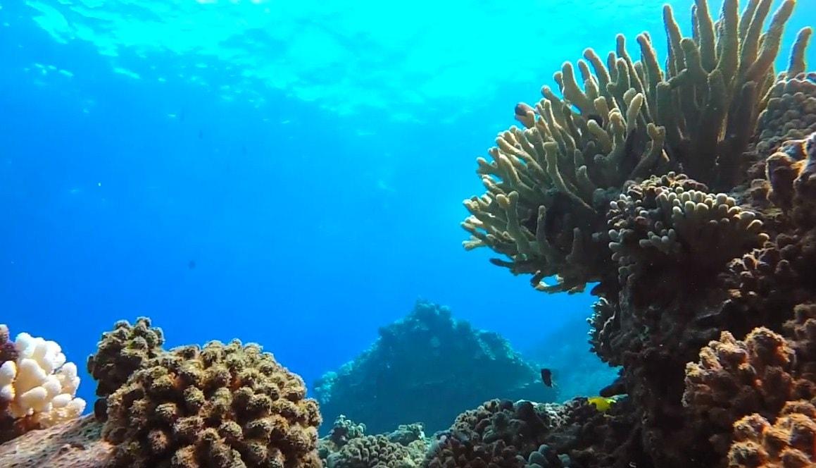scuba dive maui,scuba dive maui hawaii,scuba diving certification maui,scuba diving hawaii maui,scuba diving in hawaii maui,scuba diving in maui-min